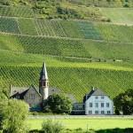 vinos de alemania mosela